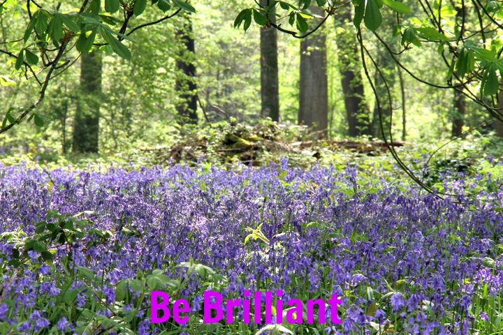 Be Brilliant 3